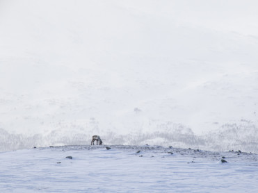 Is- og snøforhold i fjellet i Nordland og Troms per 2. april 2020
