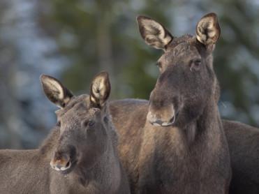 Aksjonerte etter mistanke om ulovlig jakt