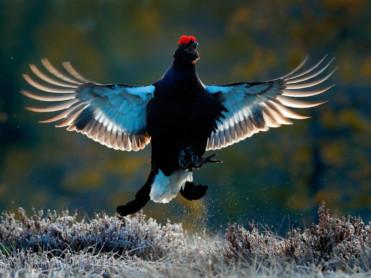 Få med deg fugleleik
