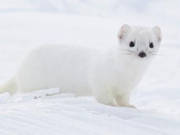 Nysgjerrigper i vinterdrakt
