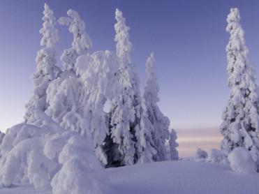 Sjekker skogen for snøskader