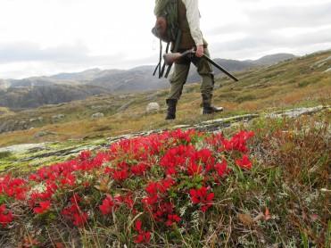 Jobbmuligheter på Helgeland