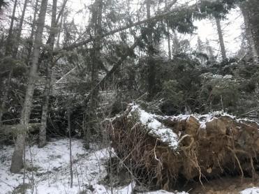Store skogskader etter Ylva