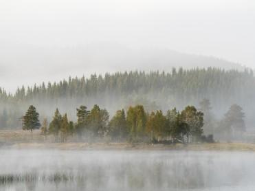 Skogens klimabidrag