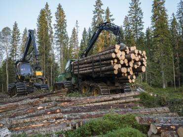 Viktig støtte til skognæringen