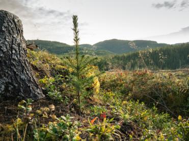Planterekord for Statskog