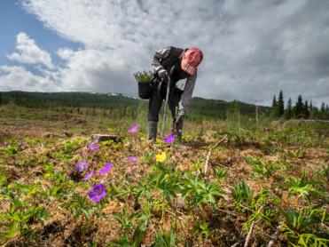 Skogplanting på rekordnivå
