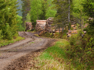 Klima, mat og norsk skog