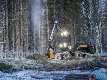 Stort skogoppdrag på anbud