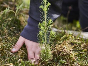 Plantet trær for livet!