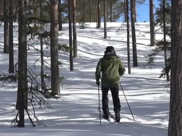 Slik bruker du granbar mot bakglatte ski